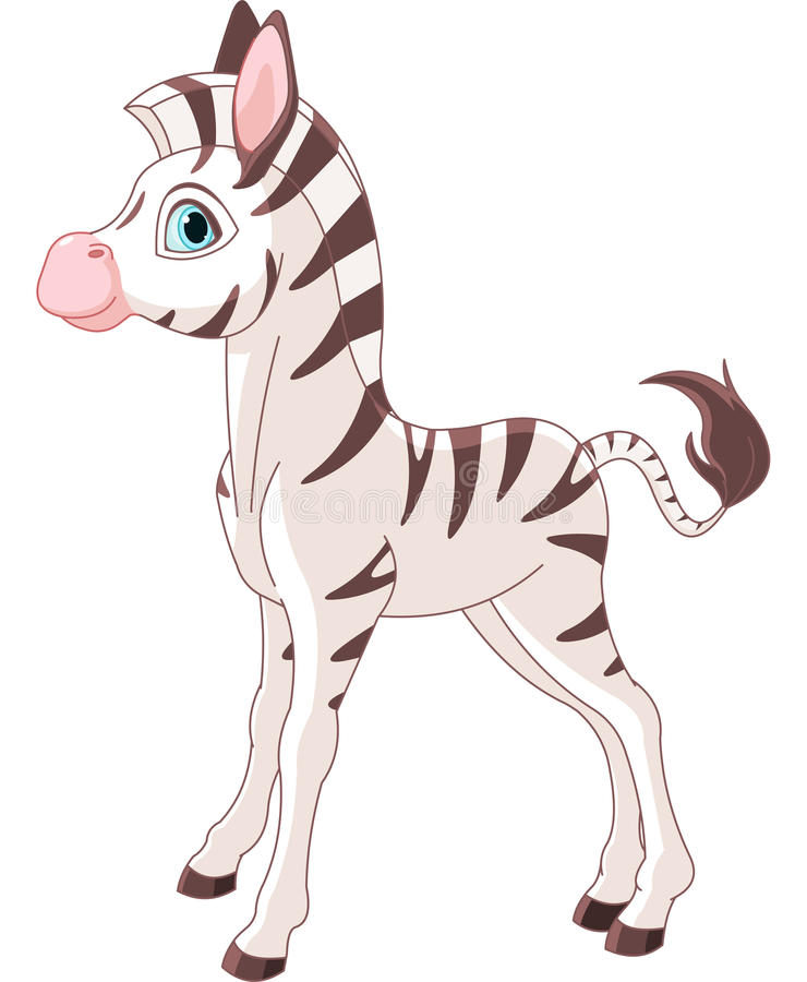 Download Zebra Foal stock vector. Illustration of young, clip - 30971236