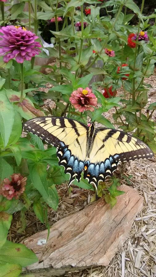 Zebra-gestreifter Schmetterling stockbild