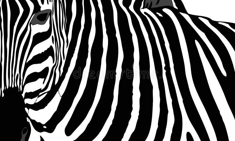 Zebra. Graphic illustration representing the mantle of a zebra royalty free illustration