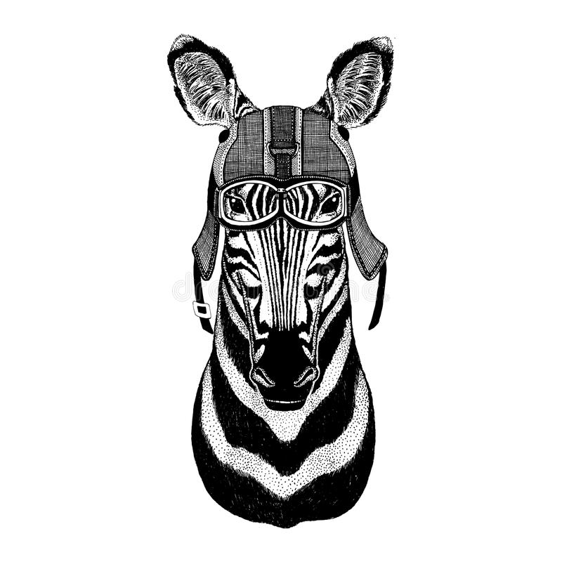 Zebra Horse wearing motorcycle helmet, aviator helmet Illustration for t-shirt, patch, logo, badge, emblem, logotype. Zebra Horse Hand drawn illustration for stock photography