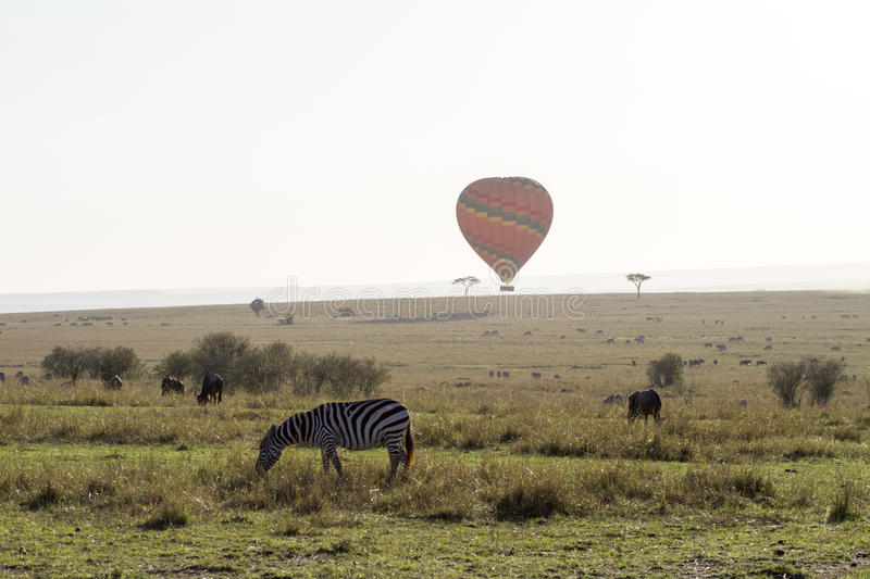 Zebra and hot ballon in Kenya royalty free stock photography