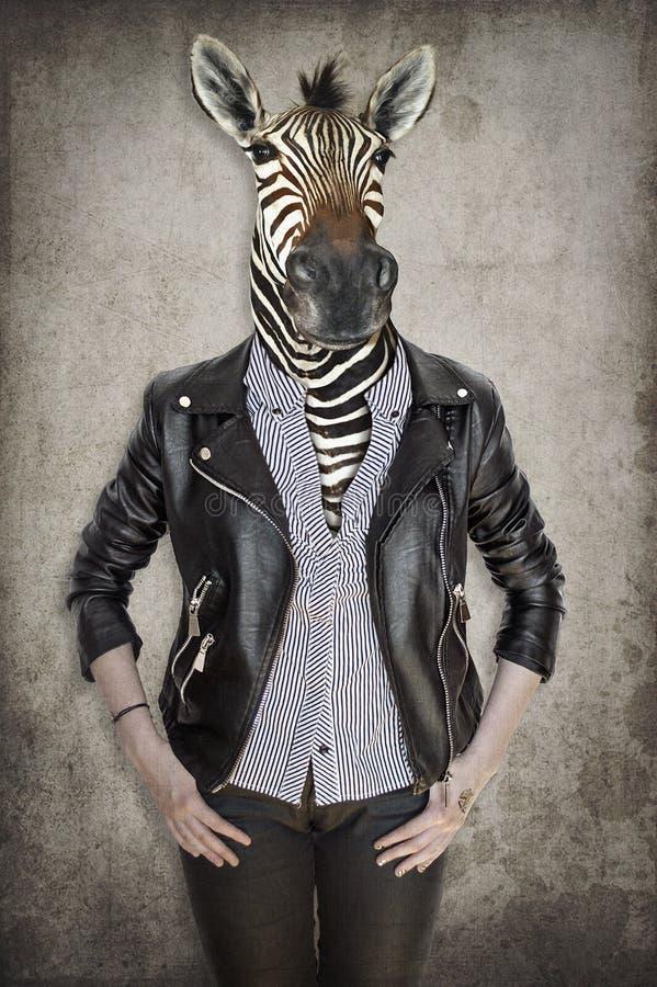 Zebra in kleren Concept grafisch in uitstekende stijl royalty-vrije stock foto