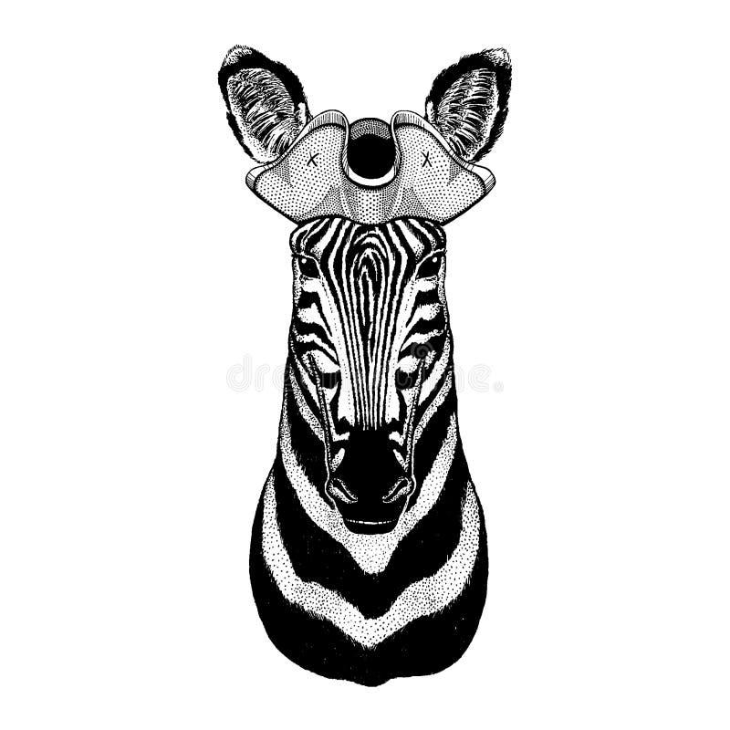 Zebra, koński jest ubranym pirata tricorn kapelusz Capitan kostium ilustracji