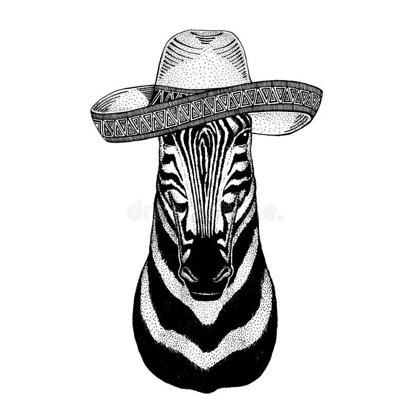 Zebra, koń jest ubranym tradycyjnego meksykańskiego kapelusz Klasyczny pi?ropusz, fiesta, przyj?cie ilustracja wektor