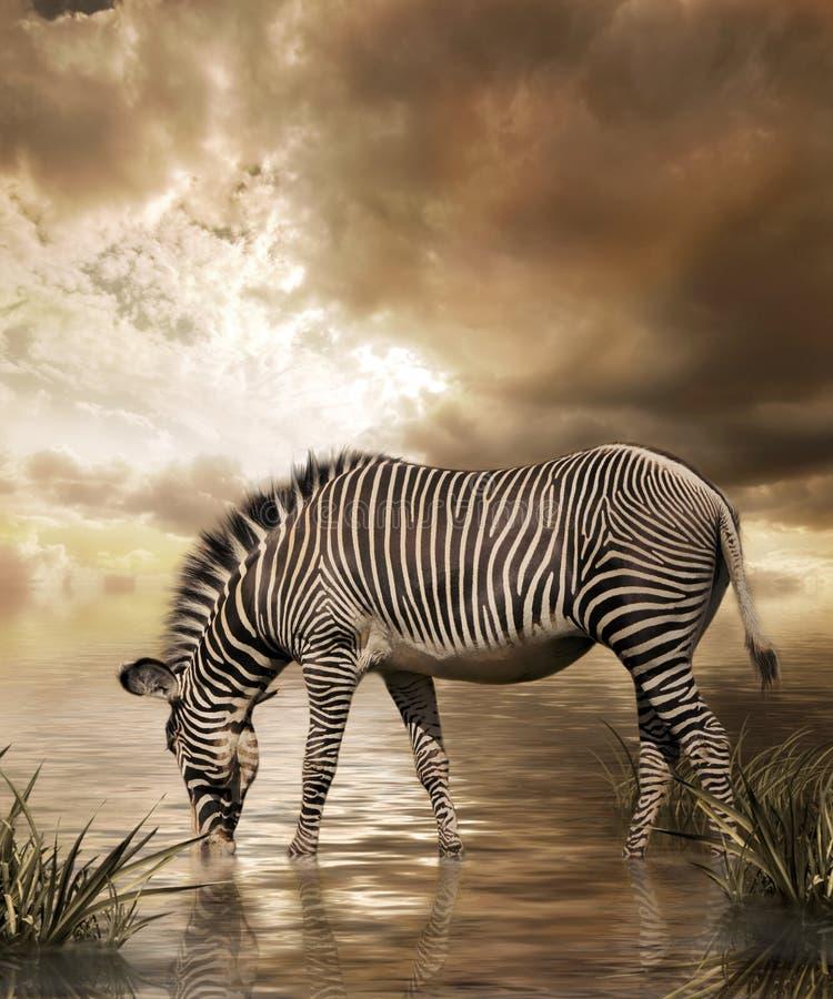 zebra marzeń zdjęcia stock