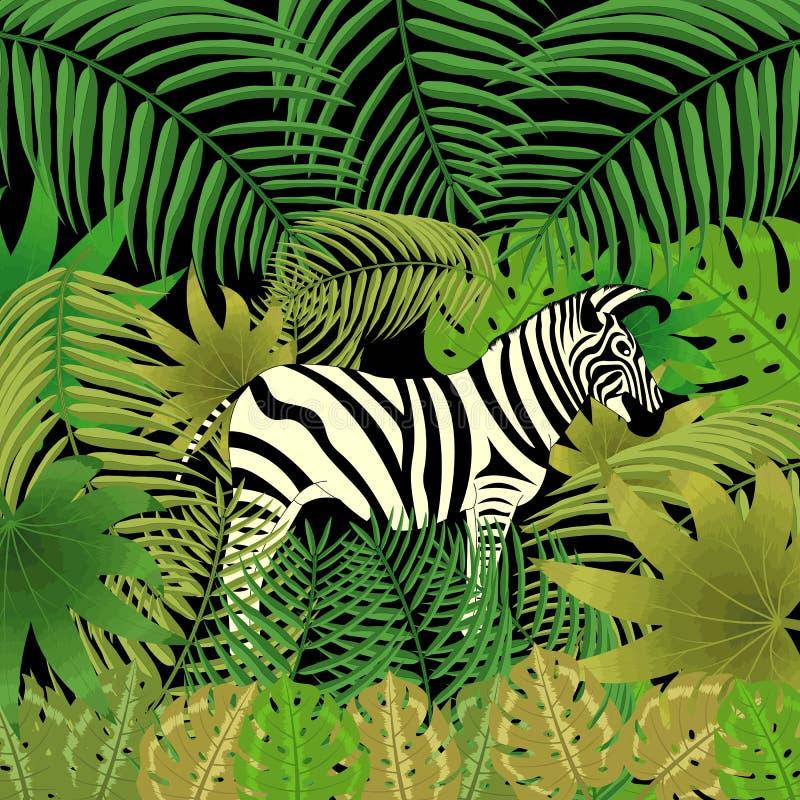 Zebra nella giungla Fogli tropicali immagine stock libera da diritti