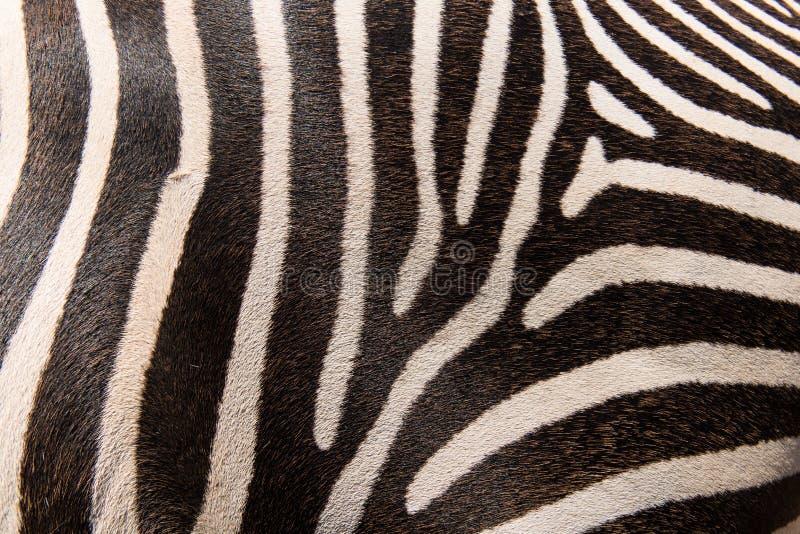Zebra pattern stock image