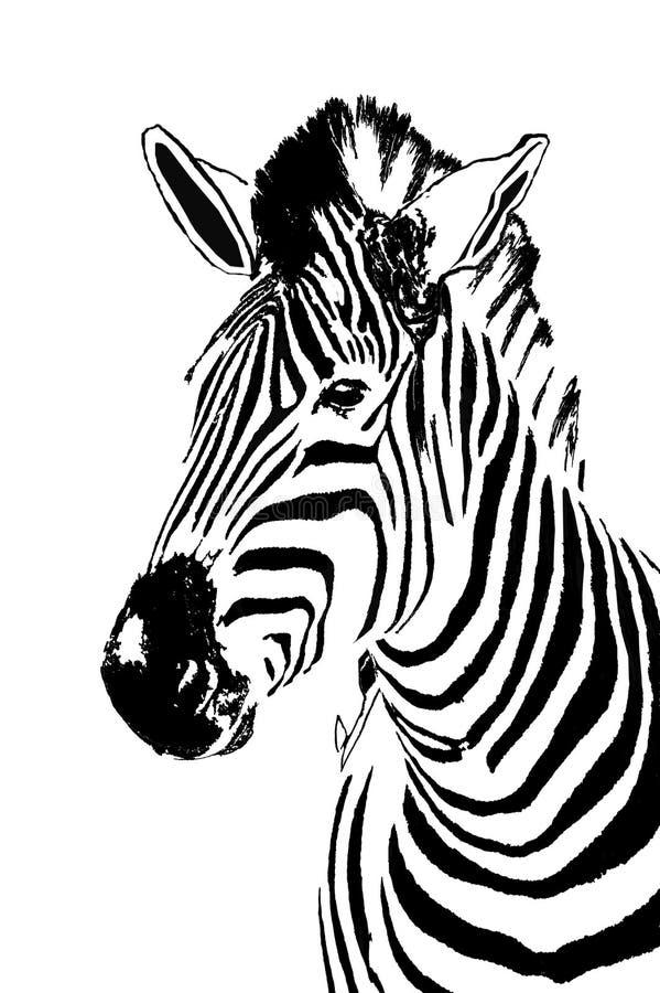 Zebra portrait. Head of a Zebra in black and white