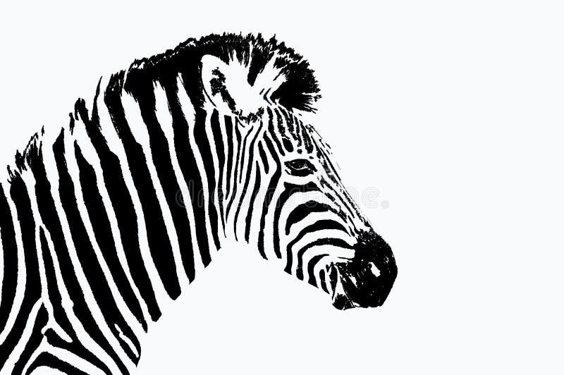 zebra portret ilustracja wektor