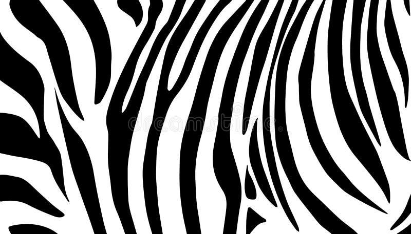 Zebra preto e branco ilustração do vetor