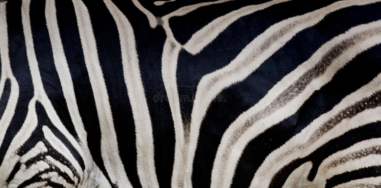 Zebra print, animal skin, tiger stripes, abstract pattern, line. Background, fabric. Amazing hand drawn illustration. Poster, banner. Black and white artwork stock images