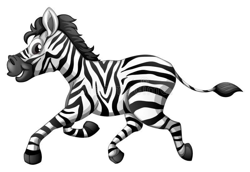 A zebra running. Illustration of a zebra running on a white background vector illustration