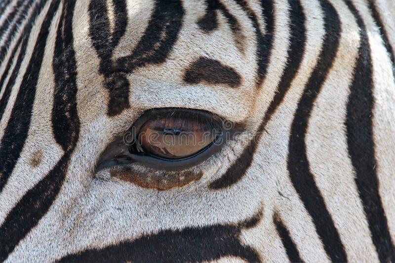 Zebra's Eye stock image