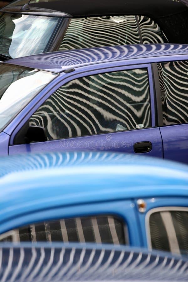 zebra samochód obrazy royalty free