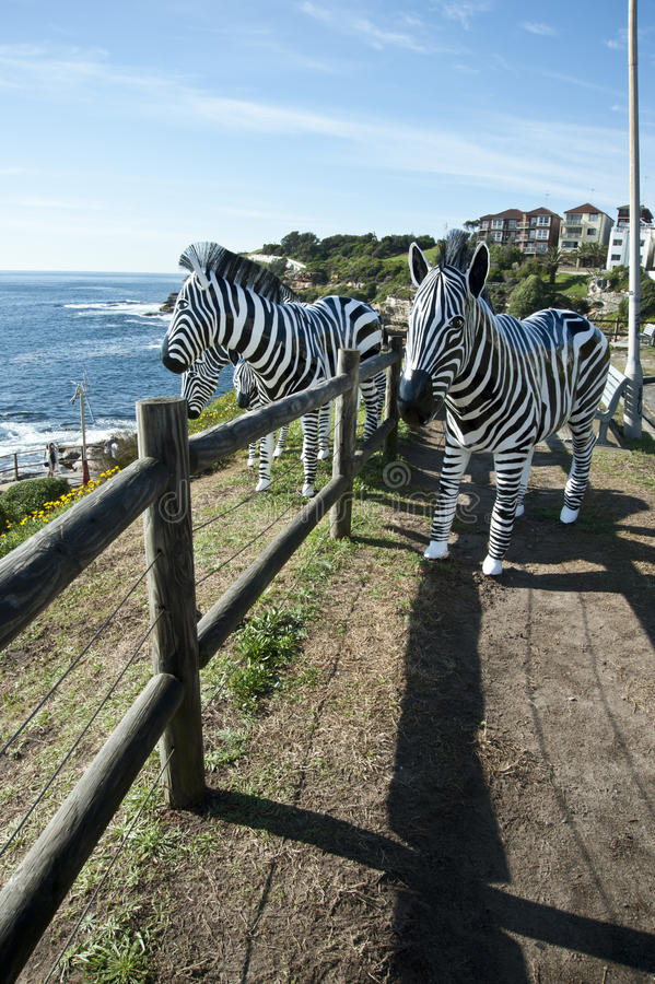 Zebra Sculptures by the Sea Bondi Beach royalty free stock photo