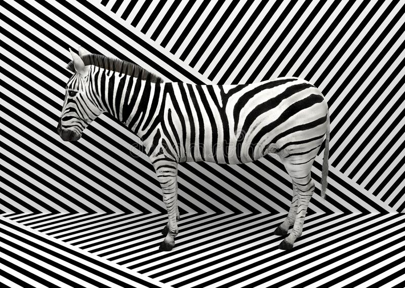 Zebra selvatica in piedi all'interno di un'area di fusione con fondo bianco e nero a strisce Illustrazione concettuale creativa 3 illustrazione di stock