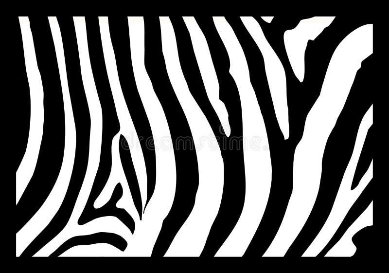 zebra skóry. ilustracji