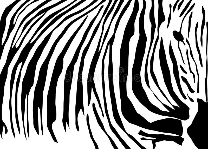 Download Zebra skin stock vector. Image of pattern, background - 20988980