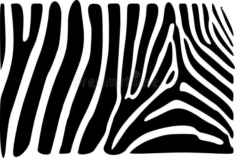 Zebra skin stock photos