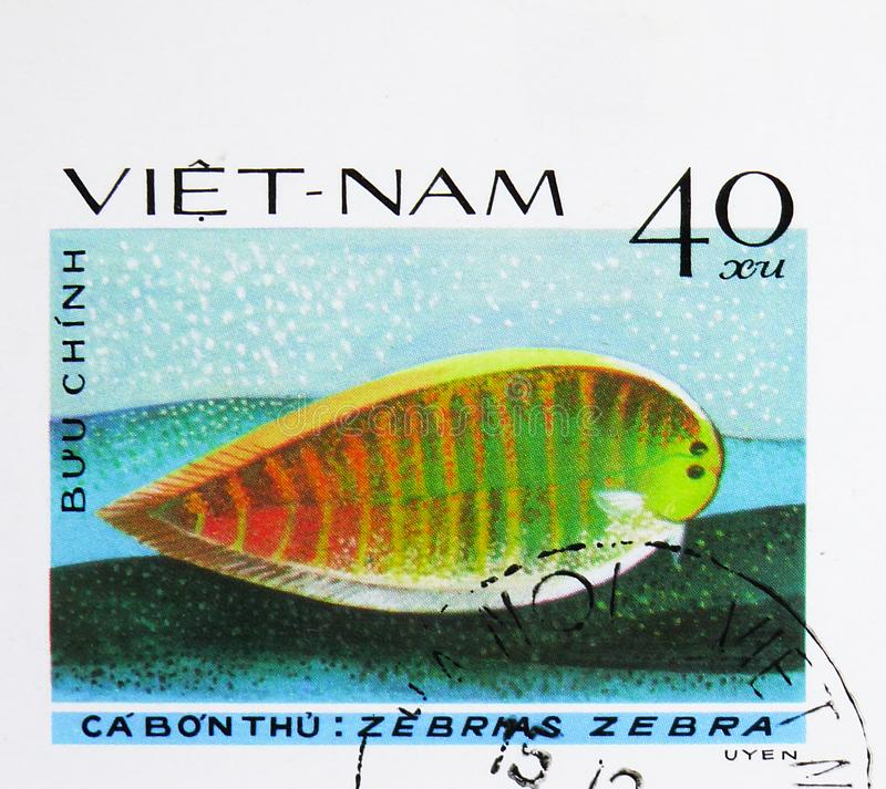 Zebra Sole (Zebrias zebra), Fish - Soles / Flatfish serie, circa 1982. MOSCOW, RUSSIA - AUGUST 4, 2019: Postage stamp printed in Vietnam shows Zebra Sole ( stock image