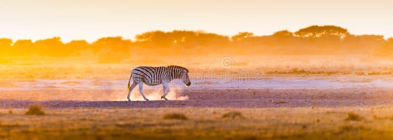 Zebra-Sonnenuntergang Botswana lizenzfreies stockfoto