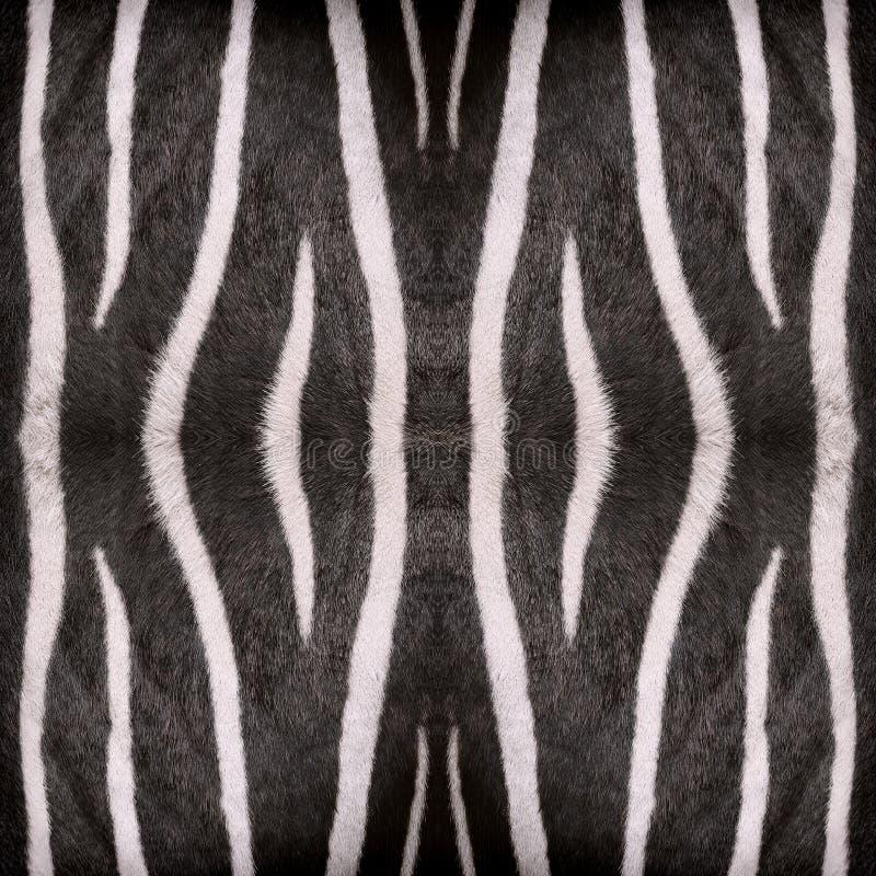Zebra streift Muster lizenzfreie stockfotografie
