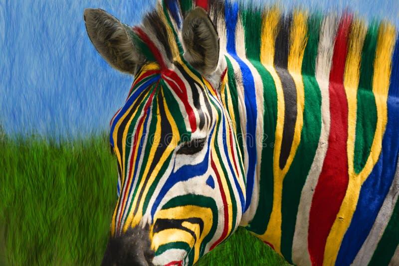 Zebra sudafricana immagini stock libere da diritti