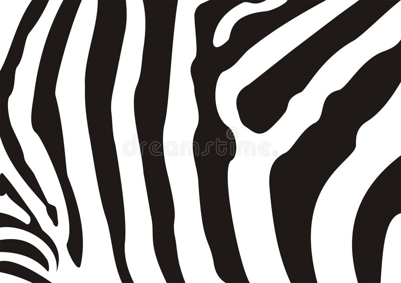 Download Zebra texture stock illustration. Illustration of camouflage - 4318107