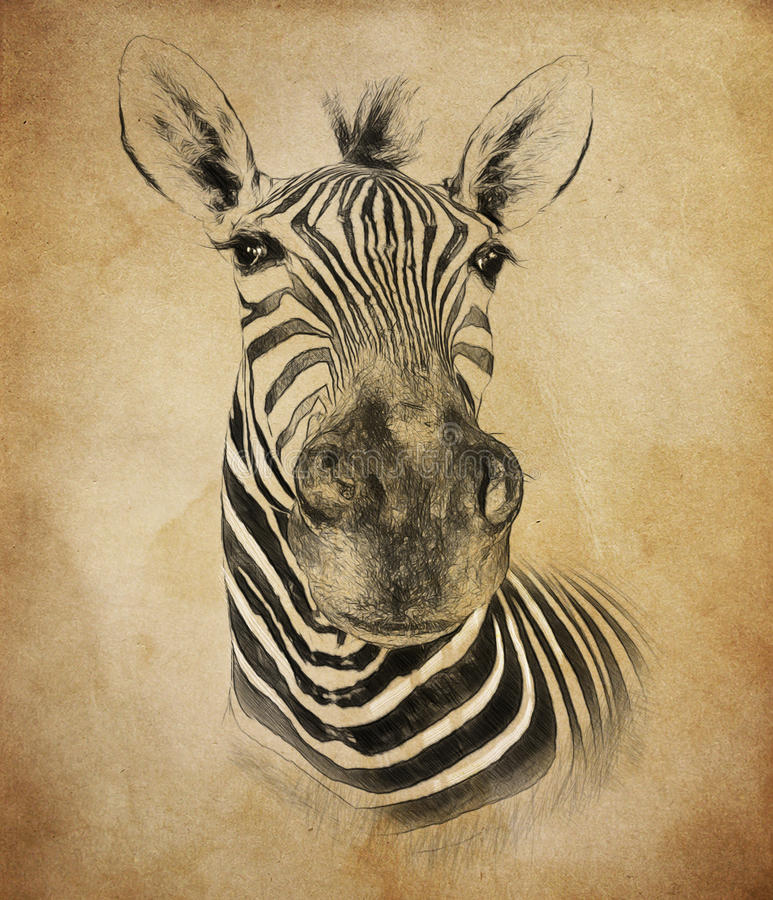 Zebra on vintage background. Illustration in draw, sketch style. stock images