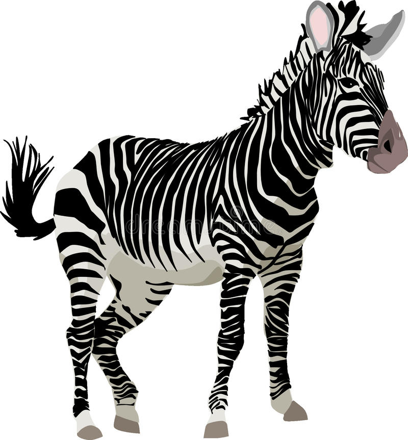 Zebra, Wildlife, Terrestrial Animal, Mammal stock photography