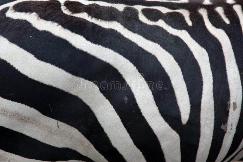 Zebra wzór obrazy stock