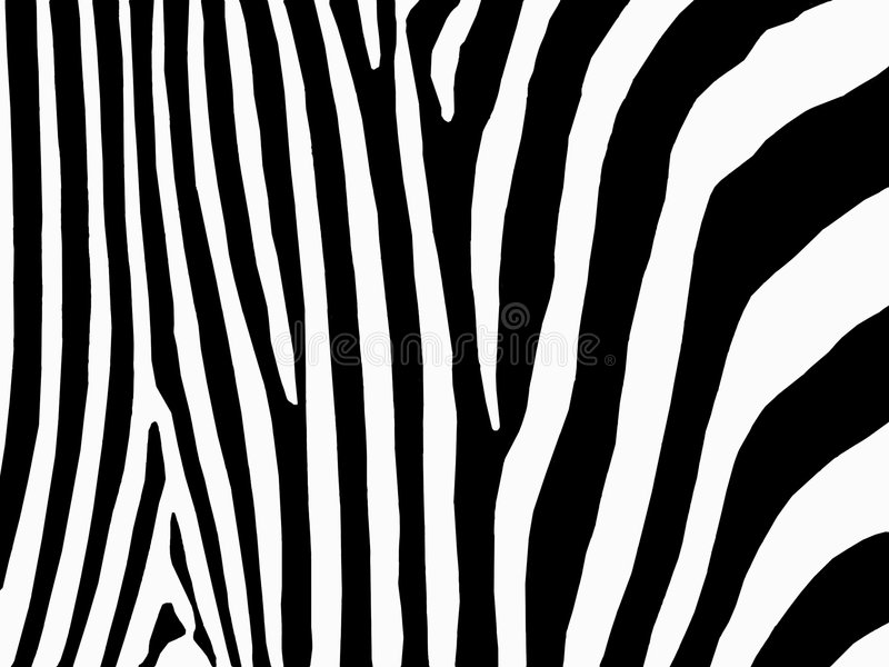 Zebradruck lizenzfreie abbildung