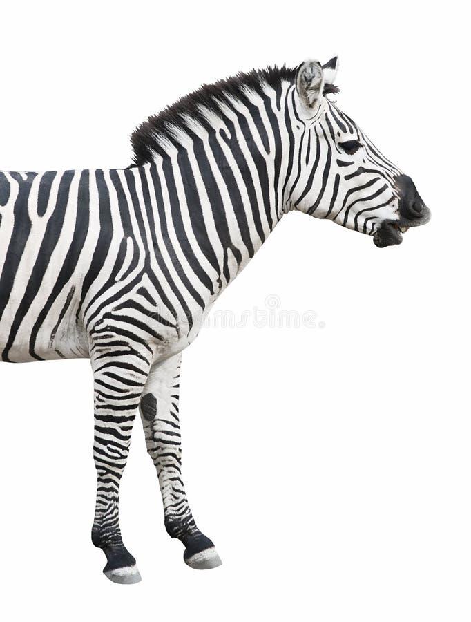 Zebragespräche getrennt über Whit