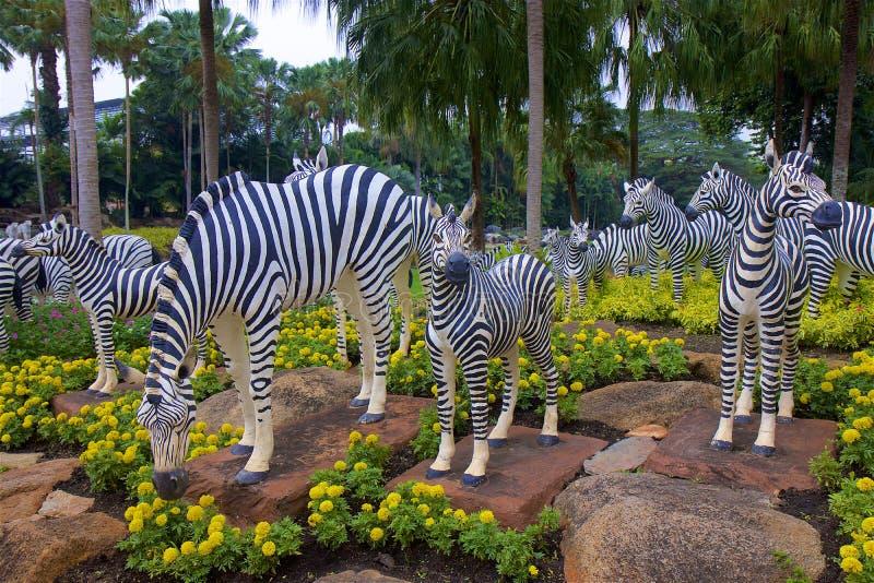 Zebras στο πάρκο Nong nooch, Ταϊλάνδη στοκ εικόνες