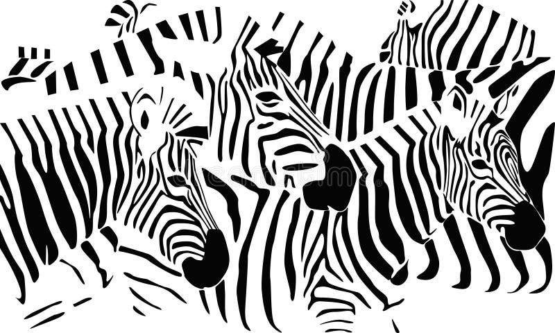 Zebras ilustração royalty free