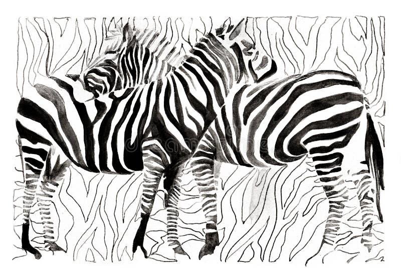Zebras vector illustratie