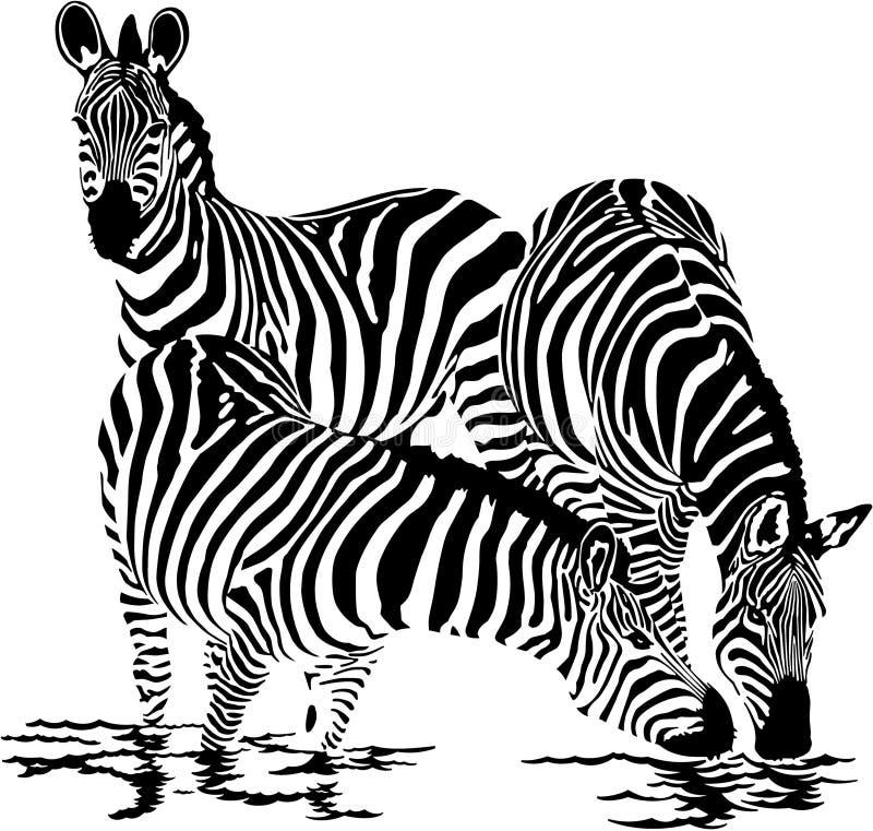 Zebras lizenzfreie abbildung