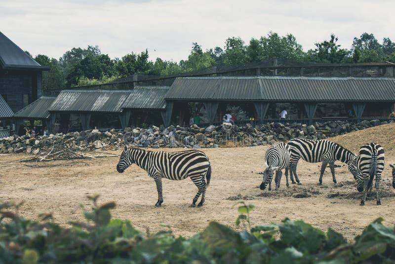 Zebras Im Zoo Kostenlose Öffentliche Domain Cc0 Bild