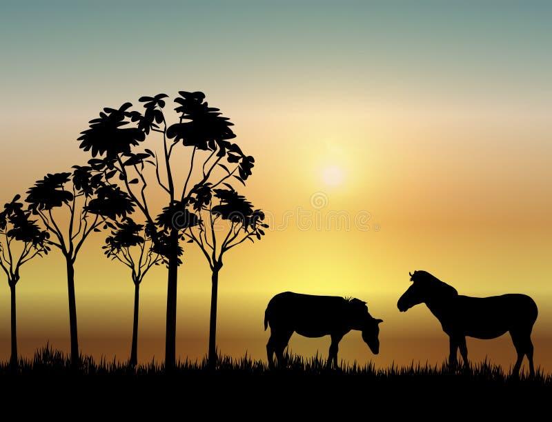 Zebras am Sonnenaufgang lizenzfreie abbildung