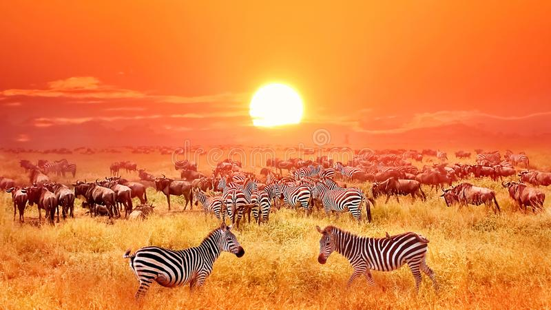 Zebras und Antilopen bei Sonnenuntergang in der afrikanischen Savanne Nationalpark Serengeti tanzania stockfoto