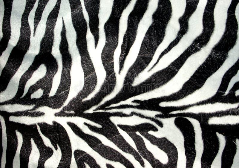 Zebrastreifen vektor abbildung