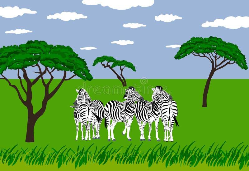 Zebre in pascolo illustrazione di stock