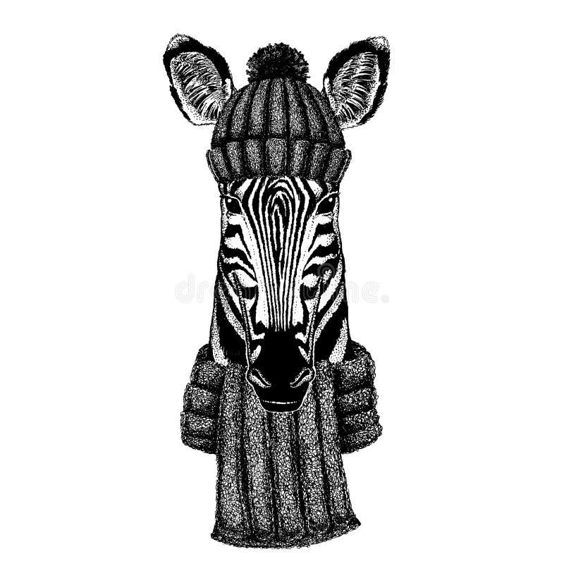 Zebry Koński Chłodno zwierzę jest ubranym trykotowego zima kapelusz Ciepła pióropuszu beanie bożych narodzeń nakrętka dla tatuażu royalty ilustracja