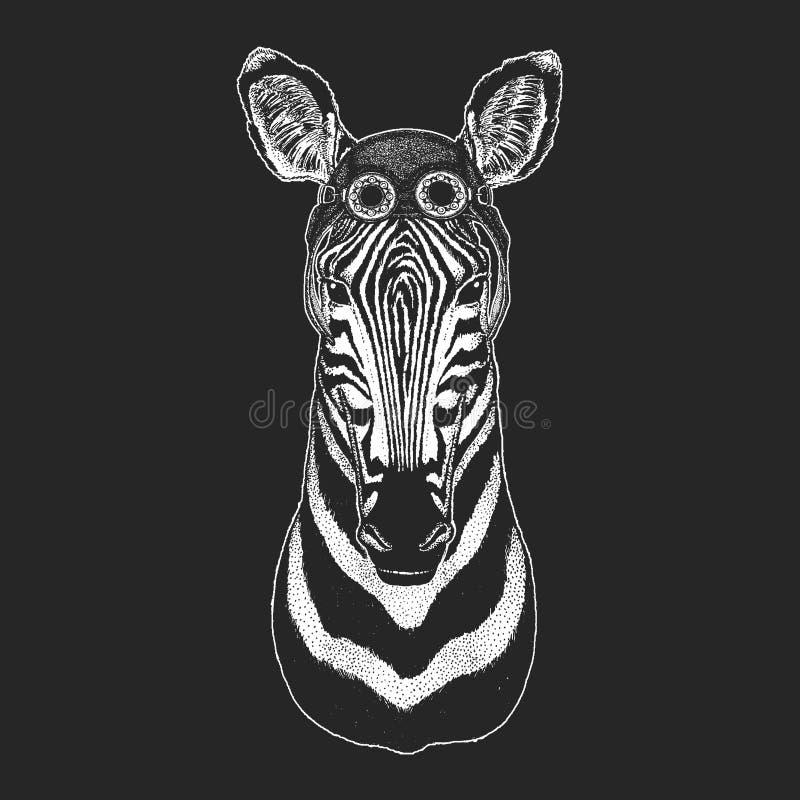 Zebry Końska ręka rysująca ilustracja dla tatuażu, emblemat, odznaka, logo, łata Chłodno zwierzęcego jest ubranym lotnika, motocy ilustracji