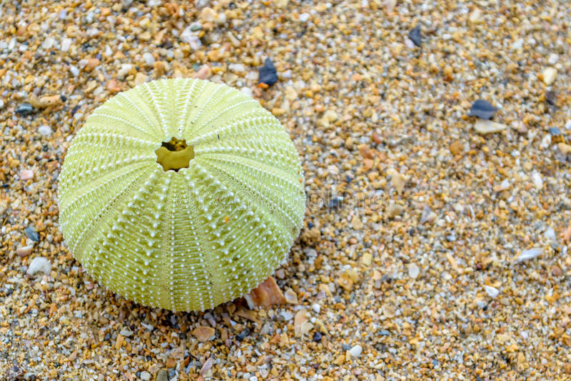 Zeeëgels op het strand royalty-vrije stock fotografie