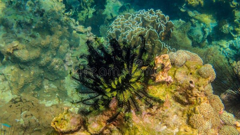 Zeeanemonen Myanmar 3 stock afbeeldingen