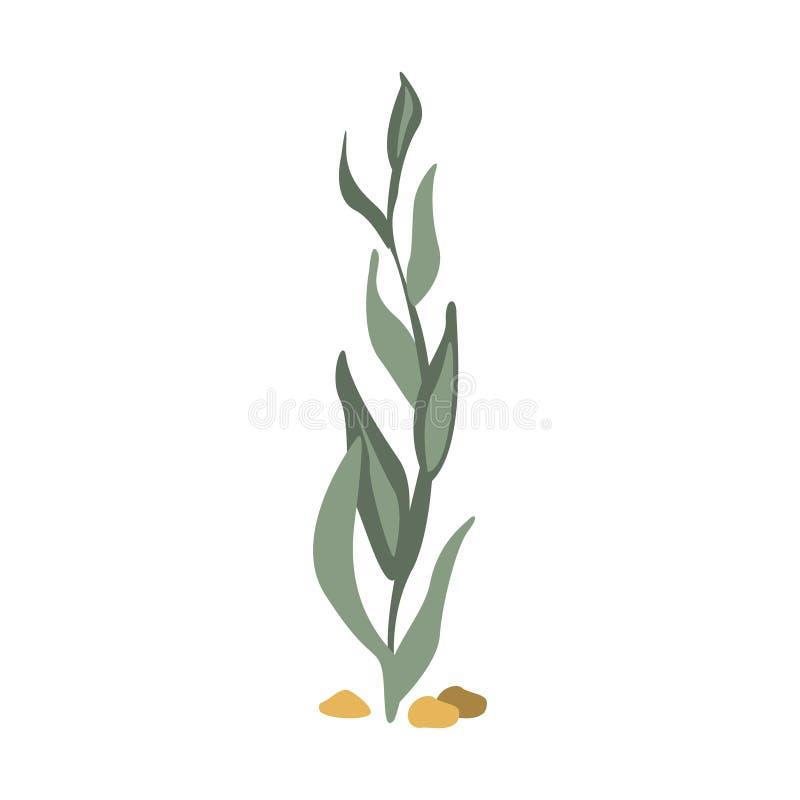 Zeebodemseagrass, een Deel van de Illustratiesreeks van Marine Animals And Reef Life van de Middellandse Zee vector illustratie