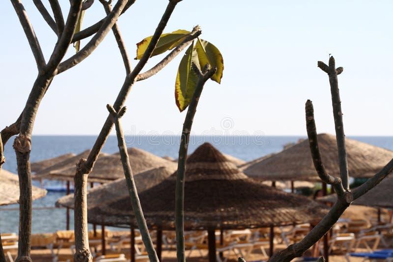 Zeegezicht, Egypte, Sharm el Sheikh royalty-vrije stock afbeelding