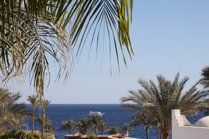 Zeegezicht, Egypte, Sharm el-Sheikh stock afbeeldingen