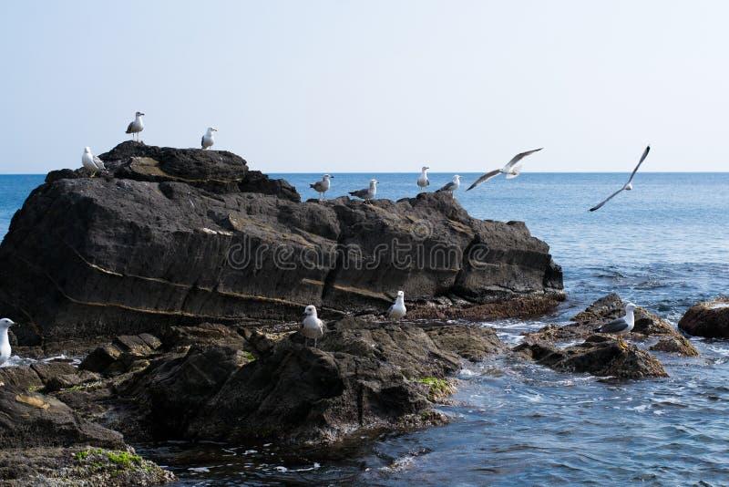 Zeegezicht en zeemeeuwen op rotsen royalty-vrije stock foto's